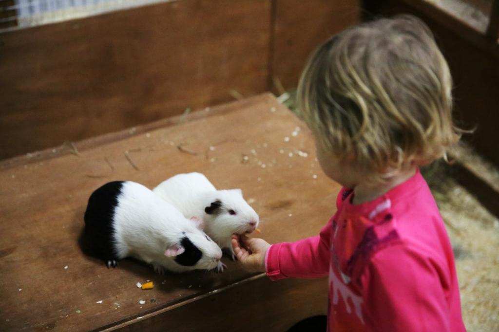 фото девочка и морские свинки