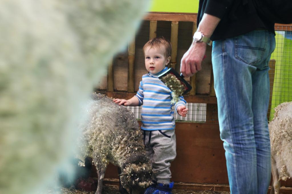 фото ребенок и овечка